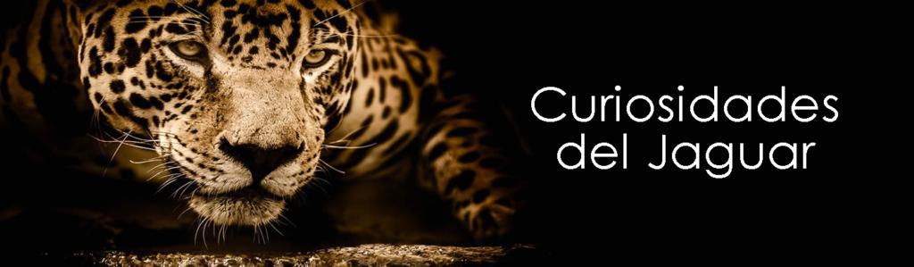 Jaguar--Banner