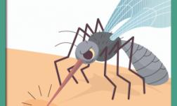 Dengue--boxbanner